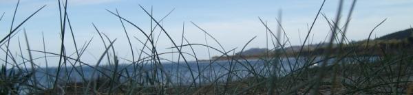 fili d'erba in primo piano di fronte al promontorio di Mandras